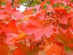the_vale_-_autumn2_517039.jpg