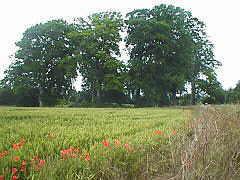 Grove - Wayland's Smithy