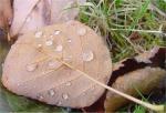 the_vale_-_autumn_379549.jpg